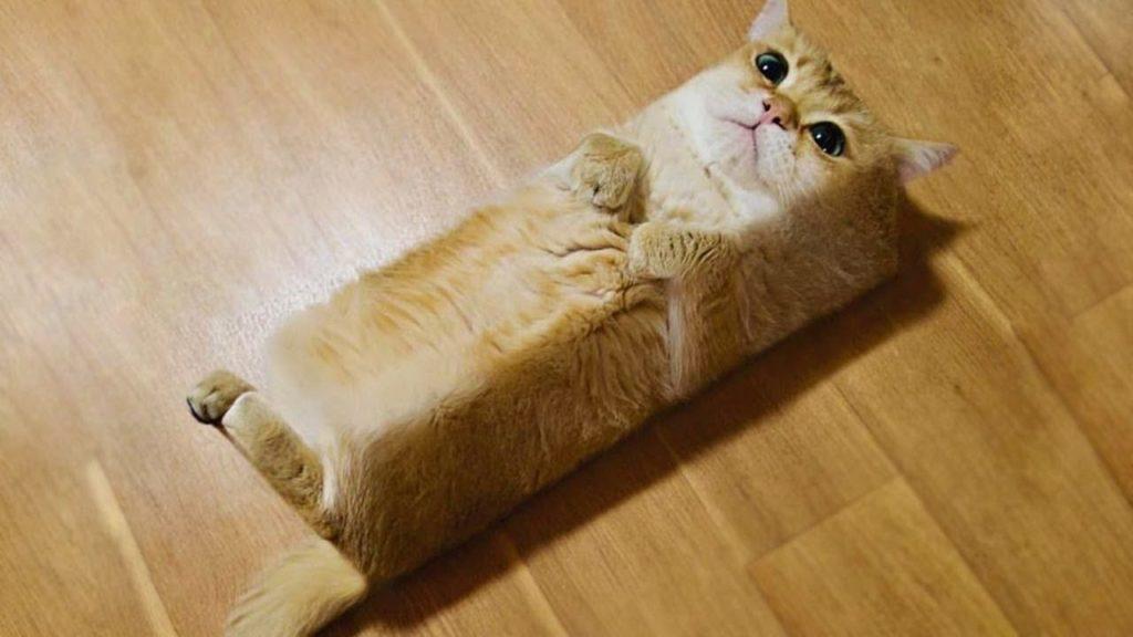 可愛い猫の画像